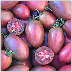Purple Russian Plum