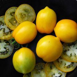 Lemon Plum
